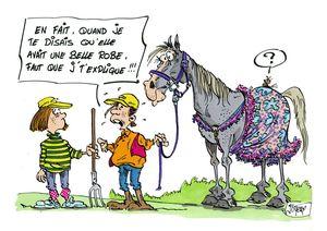 Bien cibler les réels besoins de son cheval avant de se faire plaisir niveau look..