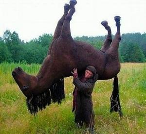 Un cheval bien en main ?