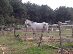 Le même cheval quelques années plus tard ...